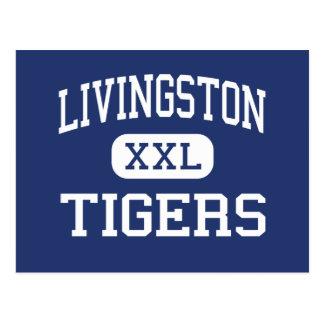 Livingston Tigers Middle Livingston Postcard
