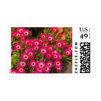 Livingstone Daisy Postage Stamp