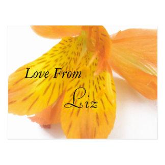 Liz Postcard