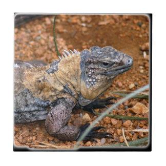 Lizard4_10x10 Tile