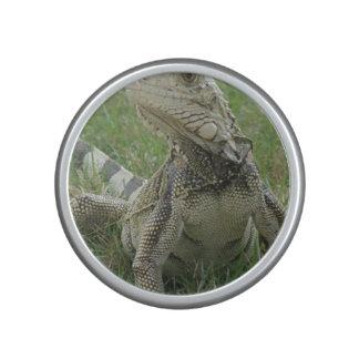 lizard-4.jpg speaker
