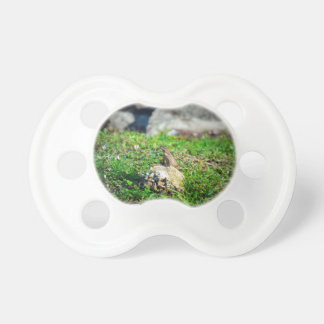 lizard at attention on rock reptile animal BooginHead pacifier