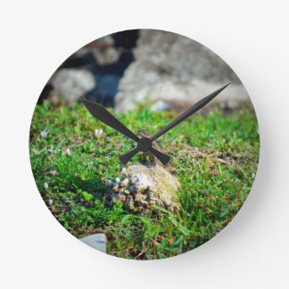 lizard at attention on rock reptile animal round wall clocks
