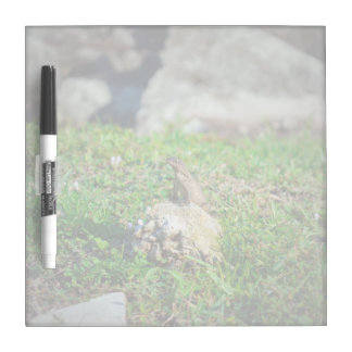 lizard at attention on rock reptile animal Dry-Erase board