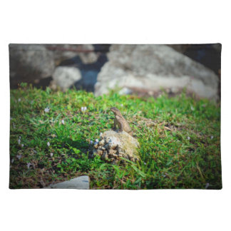lizard at attention on rock reptile animal placemat