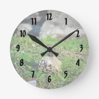 lizard at attention on rock reptile animal round clock