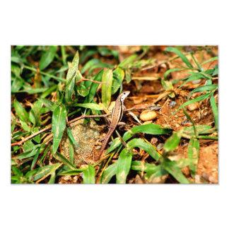 Lizard Dominican Republic Photo Print