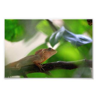 Lizard Dominican Republic Art Photo