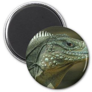 Lizard Face Refrigerator Magnets