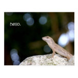 Lizard hello post card