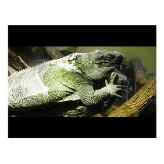 Lizard King Photography Postcard