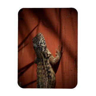 lizard looking down on wood background animal magnet