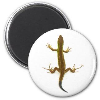 lizard magnet
