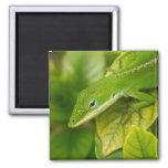 Lizard Magnet 01