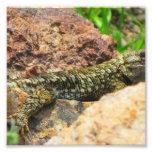 Lizard Named Smith Photo