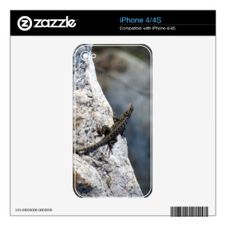 Lizard On A Rock Skins For iPhone 4S