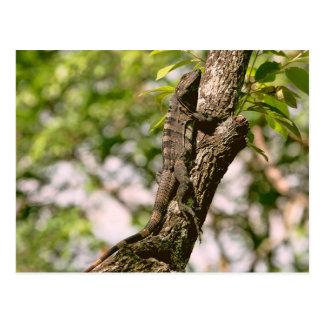 Lizard on a Tree in the Sun Postcards