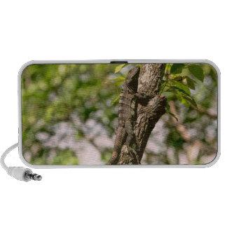 Lizard on a Tree in the Sun Speakers