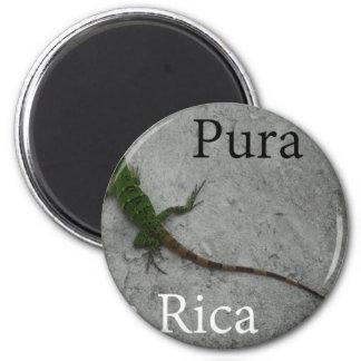 Lizard on Stone wall in Costa Rica Pura Vida! 2 Inch Round Magnet
