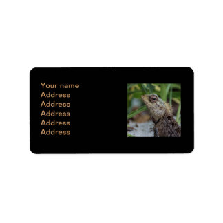Lizard Reptile Nature Photography Label