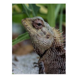 Lizard Reptile Nature Photography Postcard