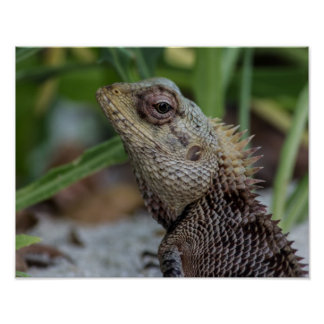 Lizard Reptile Nature Photography Poster