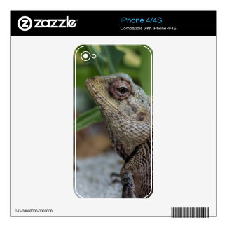Lizard Reptile Nature Photography Decal For The iPhone 4S