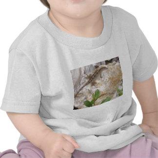 Lizard Shirt