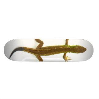 lizard skate board