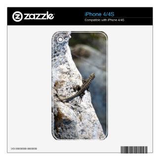 Lizard iPhone 4S Decal