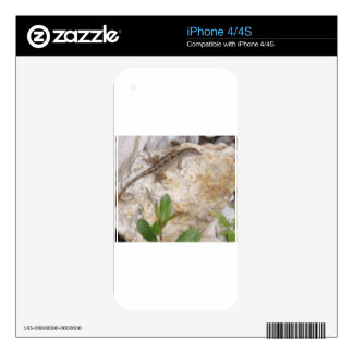 Lizard Skin For The iPhone 4