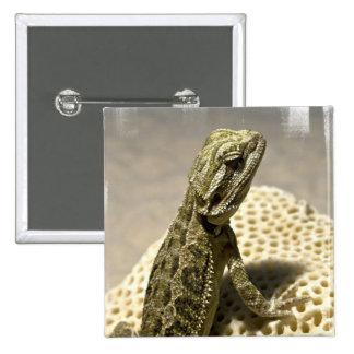 Lizard Species Pin