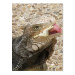 Lizard Tongue Postcard