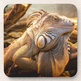 Lizard Up Close Coaster