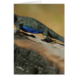 Lizards Blue Belly Scales Card