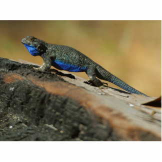 Lizards Blue Belly Scales Statuette