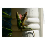 Lizards in Love Greeting Cards
