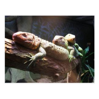 Lizards Lounging Postcard