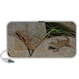 Lizards Mating Speakers