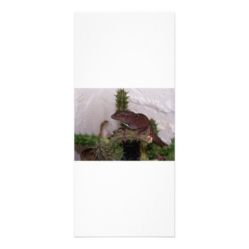 Lizards on cactus against pale yellow background rack card template