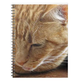 Lizzie en el Windowsill Cuadernos