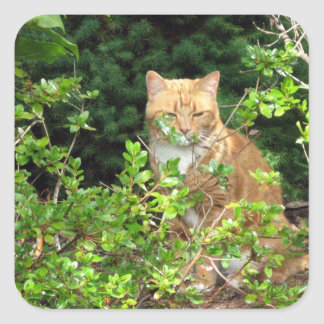 Lizzie, the cat, in the Front Yard Square Sticker