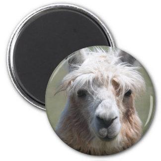 Llama 2 Inch Round Magnet