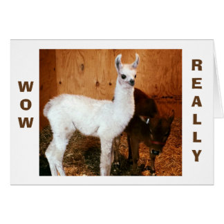 "LLAMA AND CALF SAY ""HAPPY BIRTHDAY MOM"" CARD"