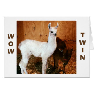 "LLAMA AND CALF SAY ""TWIN"" YOU LOOK FABULOUS CARD"