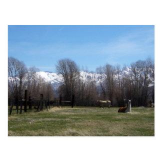 Llama  And Ruby Mountains Postcard