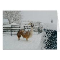 "Llama ""Arapaho"" In Snow Greeting Card"