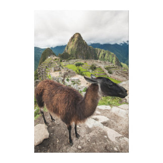 Llama At Machu Picchu, Aguas Calientes, Peru Canvas Print