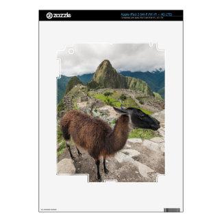Llama At Machu Picchu, Aguas Calientes, Peru iPad 3 Skin