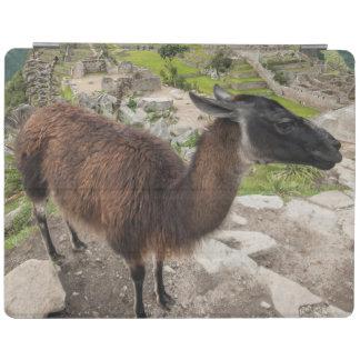 Llama At Machu Picchu, Aguas Calientes, Peru iPad Smart Cover